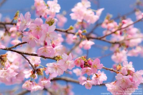 春が始まるよ。