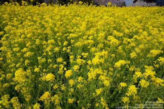 お花畑と目線の関係性 -その1-