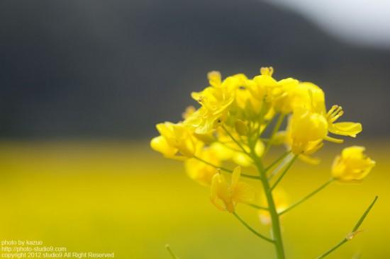 お花畑とマクロレンズの関係性