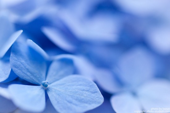 Macro World-紫陽花
