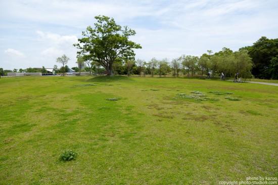 広い草原に木が一本