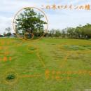 広い草原に木が一本 ポイント
