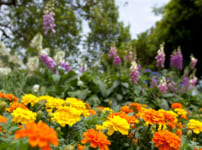 一歩近づいても新しい世界が見える。花壇