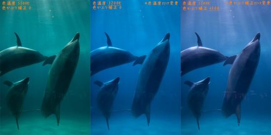 イルカ(補正後の比較)