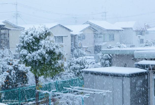 普通に撮った雪