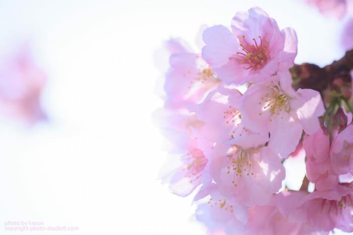お花を生かしてプラス補正