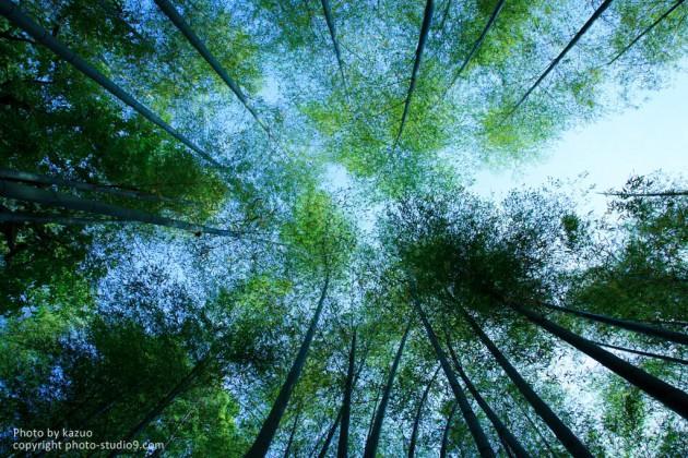 緑を深く、鮮やかに(作例)