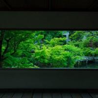 深く鮮やかな緑