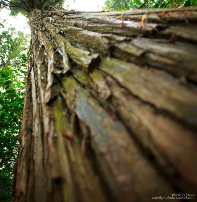 樹木を迫力いっぱいに撮る
