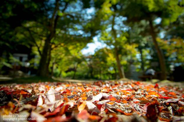 秋は足元から