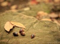 木の実で秋を表現