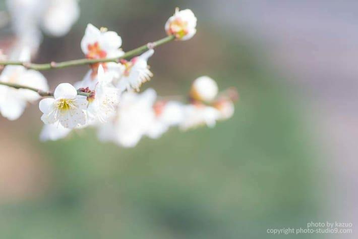 梅の撮り方