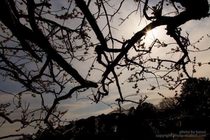 梅の撮り方 枝の処理