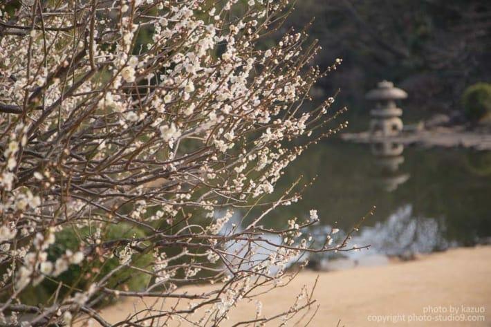 梅の撮り方 背景