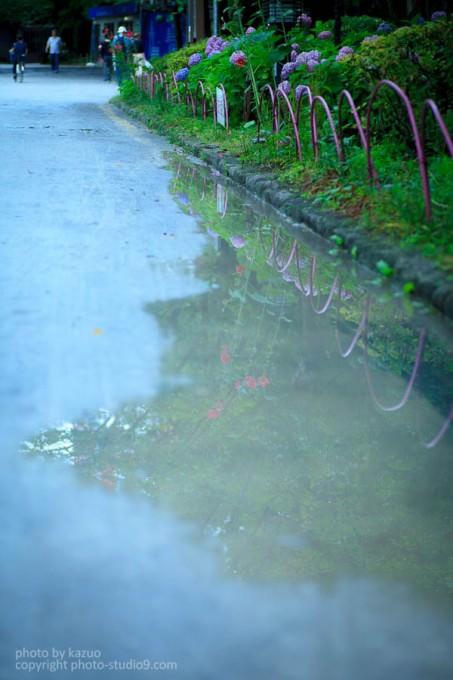 あじさいの撮り方 雨の日