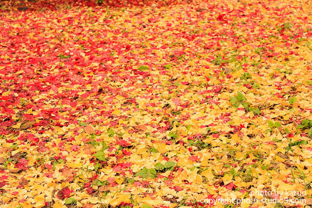 紅葉の撮り方 足下