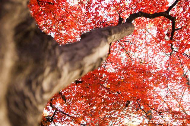 紅葉の撮り方 背景の色