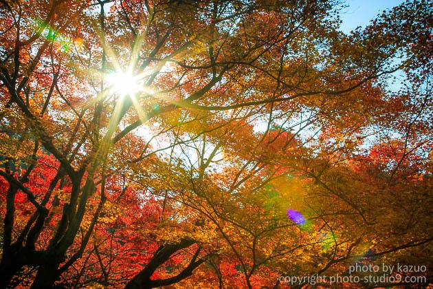 紅葉の撮り方 逆光