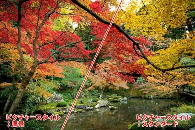紅葉の撮り方