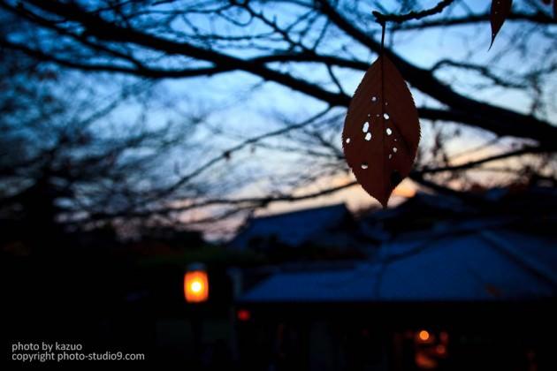 紅葉の撮り方 京都
