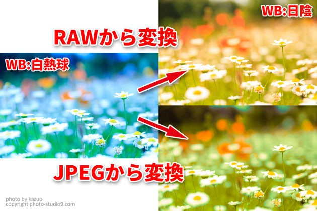 RAWとJPEGの違い ホワイトバランス