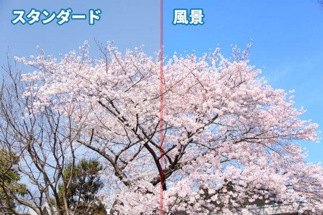 桜の撮り方ピクチャースタイル