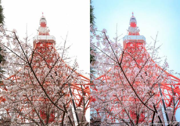 桜の撮り方 RAW現像