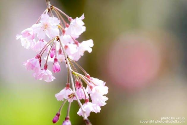 桜の撮り方 人がいるとき