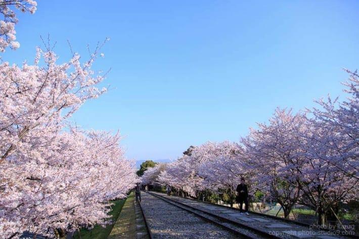 桜の撮り方 人を消す