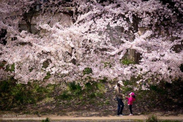 桜の撮り方 人を入れる