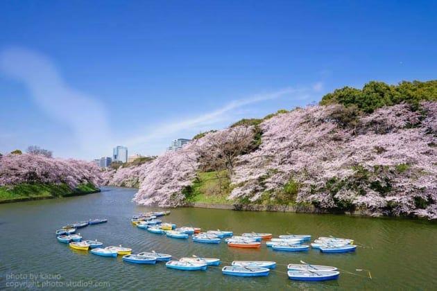 桜の撮り方 千鳥ヶ淵