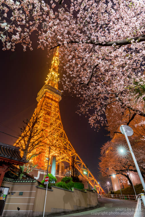 桜の撮り方 HDR