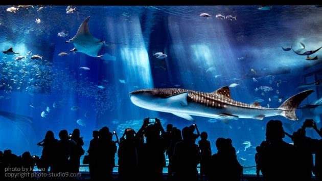 Lightroom かすみの除去 作例 美ら海水族館 黒潮の海
