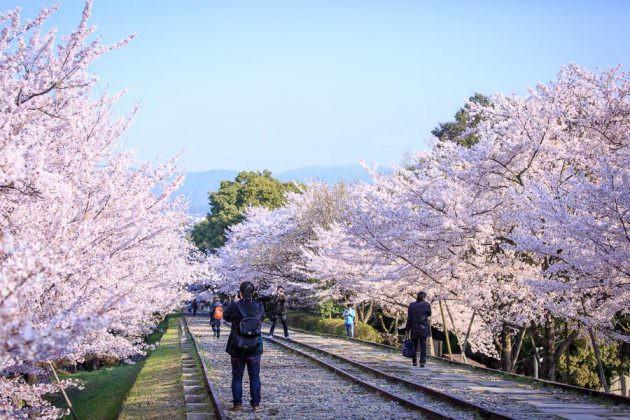 京都 ポートレート おすすめスポット 蹴上インクライン