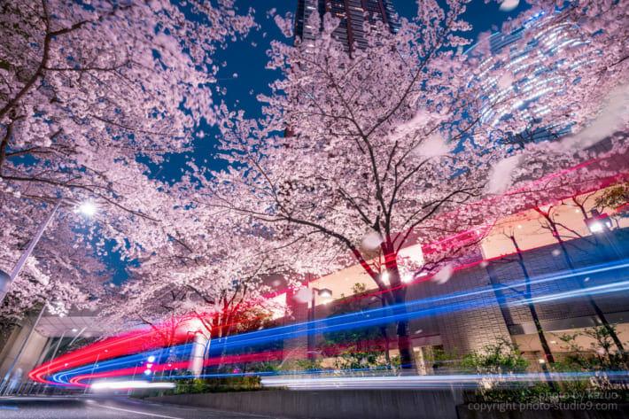 夜桜 現像 レタッチ 完成