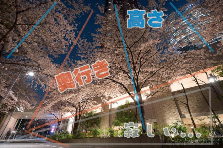 夜桜 構図
