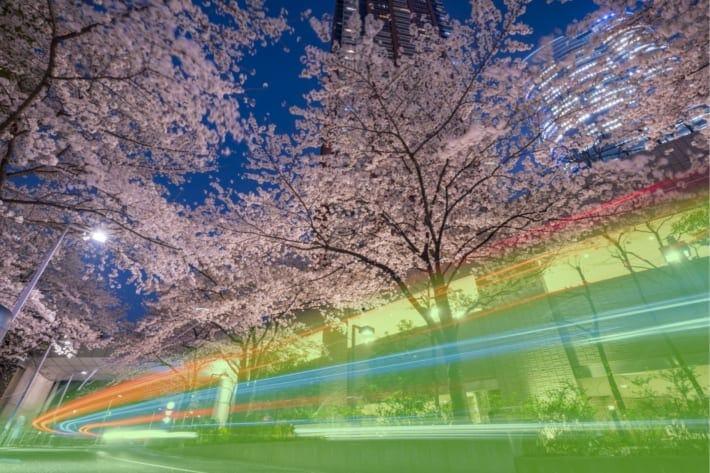 夜桜 現像 レタッチ Lightroomパラメータ