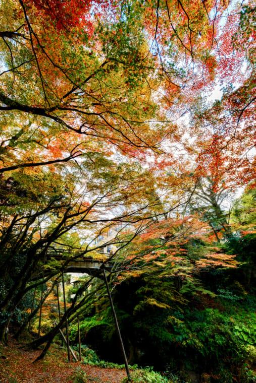 鶴仙渓紅葉