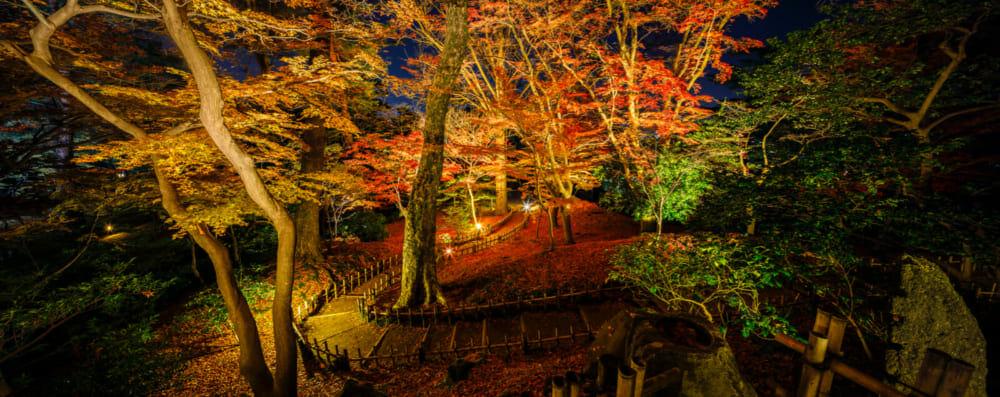 兼六園ライトアップ「秋の段」山崎山より