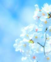 今年こそキレイに桜の写真を撮りたい人へ!15の撮り方ヒント!